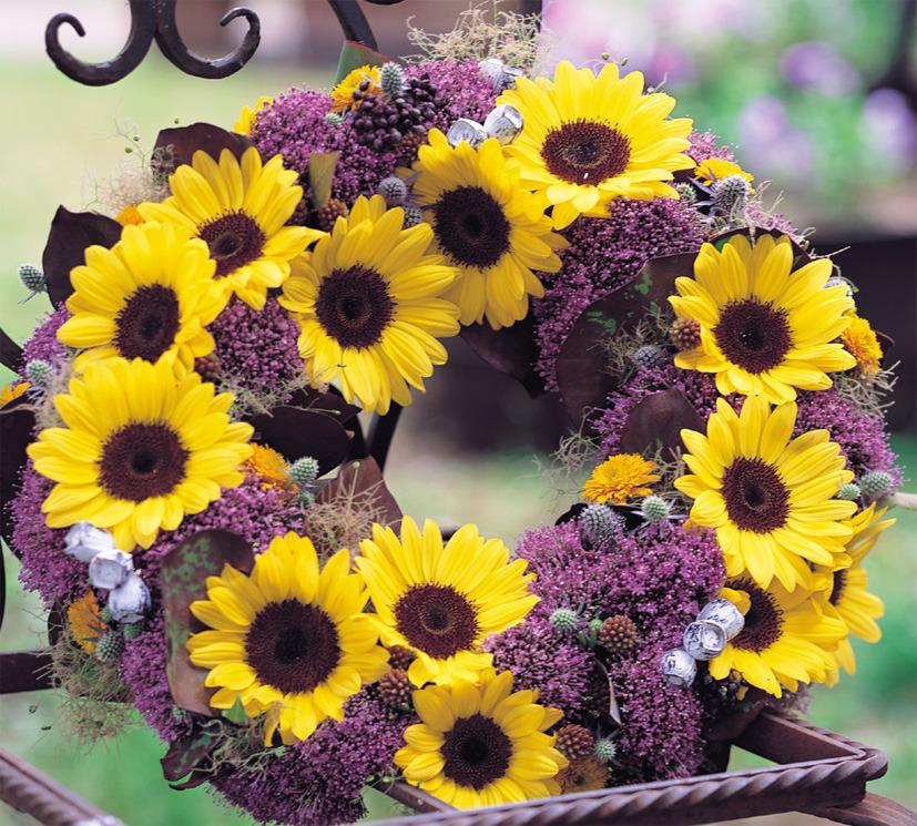 Sunflowers_helianthus_annuus_f1_sunrich_lemon_summer-1.full
