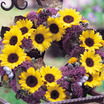 Sunflowers_helianthus_annuus_f1_sunrich_lemon_summer-1.thumb