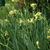 Irises2.small