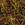 Coleus: Solenostemon scutellarioides