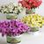 Petunias_petunia_x_hybrida_pop_rocks_lavender-1.small