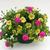 Petunias_petunia_x_hybrida_suncatcher_pink_lemonade-2.small