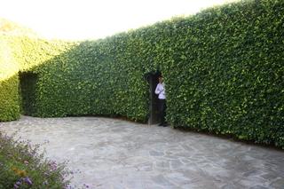 alice in wonderland hedge room.