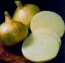 Onion, Short Day 'White Granex'
