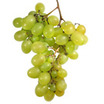 Thompson+bunch+grape+vine.thumb