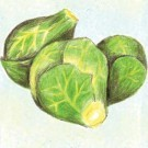 Catskill-brussels-sprouts.full