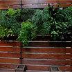 Green_vegetable_garden_wall.thumb