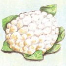 Giant-of-naples-cauliflower.full