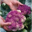 Purple-of-sicily-cauliflower.thumb