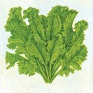 Mustard-greens-southern-giant-curled.full