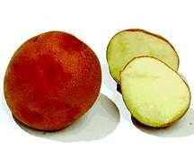 Potato, Bison