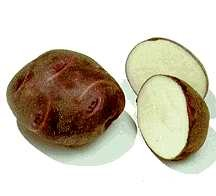 Potatoes_solanum_tuberosum_viking_purple-1.full