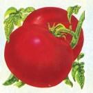 Rutgers-tomato.full