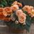 Begonias_begonia_go_go_salmon-1.small