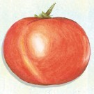 Tatar-of-mongolistan-tomato.full