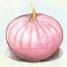 Violet-de-galmi-onion.full