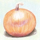 Yellow-of-parma-onion.full
