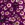 Cineraria: Pericallis x hybrida 'Jester® Carmine Bicolor'
