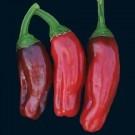 Italian-pepperoncini-pepper.full