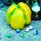 Quadrato-d-asti-giallo-pepper.full