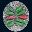 Tam-jalapeno-pepper.full