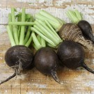 Round-black-spanish-radish.full