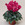 Cyclamen: Cyclamen Persicum, 'Laser™ Fuchsia'