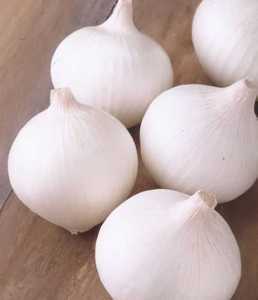 Onion, Short Day 'Texas Early White'