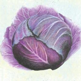 Cabbage_brassica_oleracea_red_express.full