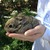 Baby_rabbit.small