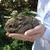 Baby_rabbit.small
