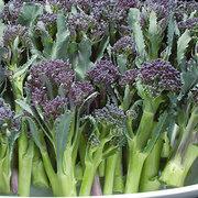 Broccoli_brassica_oleracea_summer_purple_hybrid.full