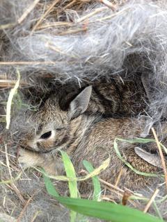 Bunny nest