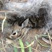 Bunny_nest.thumb