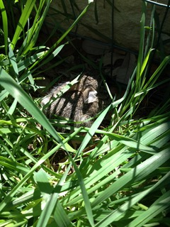 Bunny out in the garden