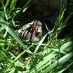 Bunny_out_in_garden.thumb