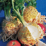 Root_vegetables_apium_graveolens_var._rapaceum_monarch.full