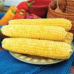 Corn_zea_mays_var_rugosa_yellow_mirai_148y.thumb