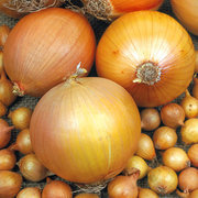 Onions_allium_cepa_bid_daddy_hybrid.full