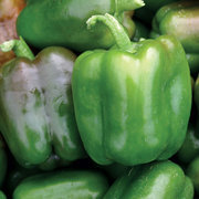 Peppers_capsicum_annuum_candy_bell_hybrid.full