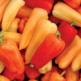 Peppers_capsicum_annuum_chablis_hybrid.detail
