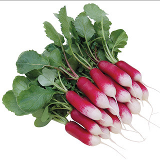 Radishes_raphanus_patricia.full
