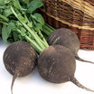 Radishes_raphanus_runder_schwarzer_winter_black_spanish_round.thumb
