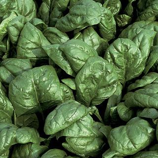 Spinach_spinacia_oleracea_palco_hybrid.full