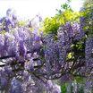 Chanticleer's_gravel_garden1.thumb