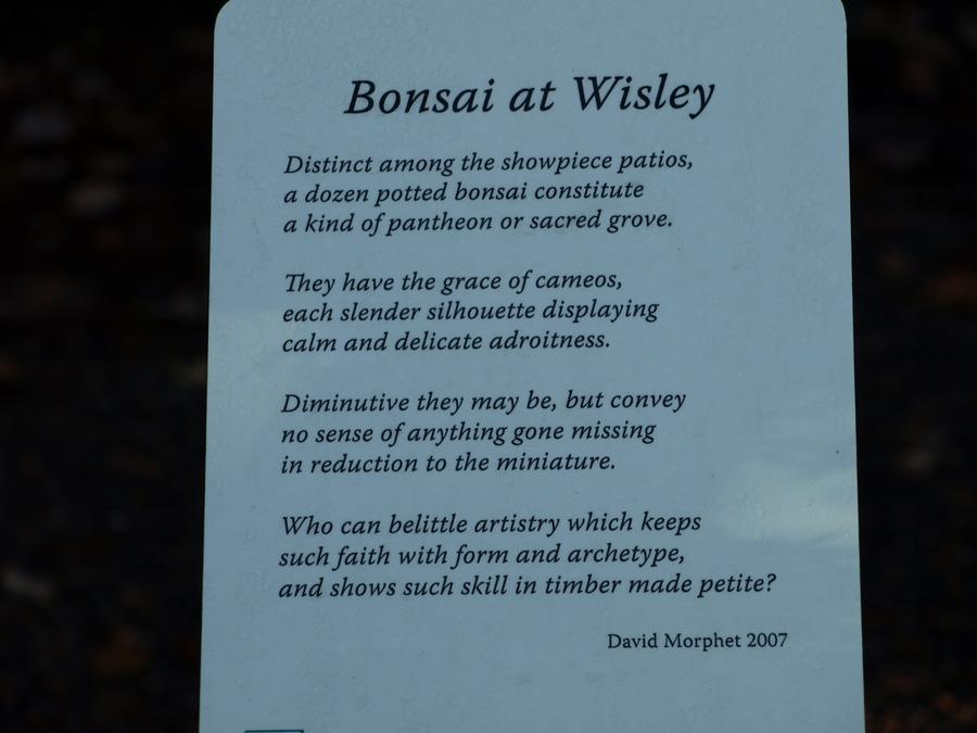 Pc040381bonsai_poetry.full