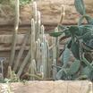 Pc040395cactus.thumb