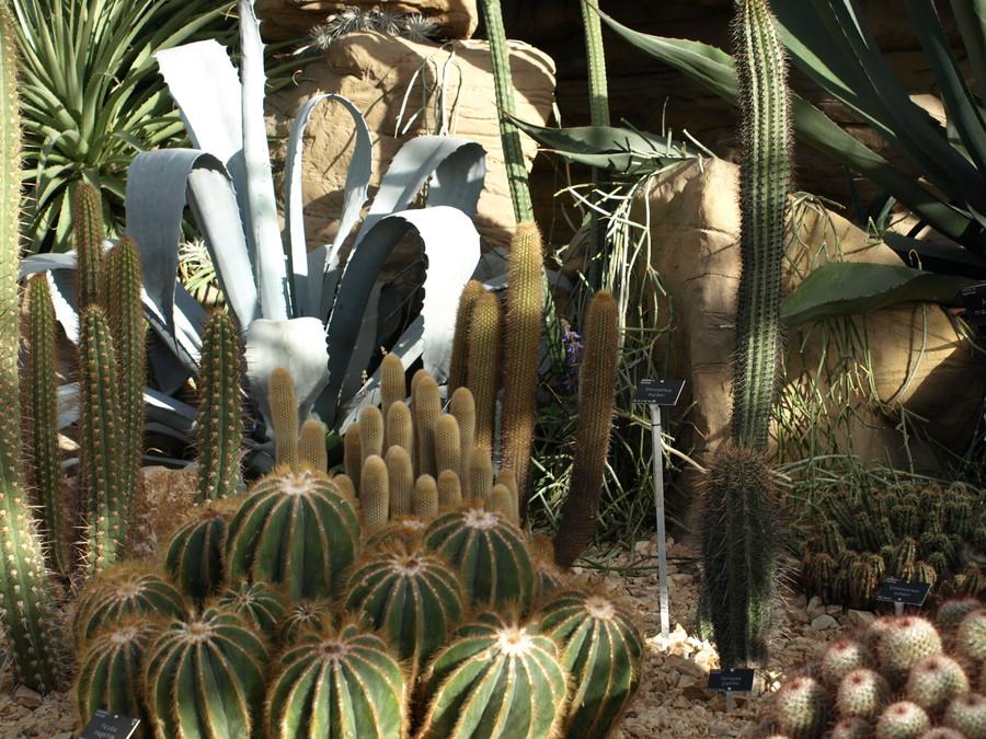Pc040397_cactus2.full