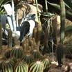 Pc040397_cactus2.thumb