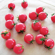 Tomatoes_lycopersicon_esculentum_sweet_treats_hybrid.full